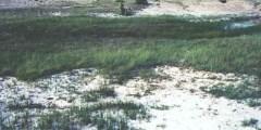 Relation entre la salinité, les sols et les plantes