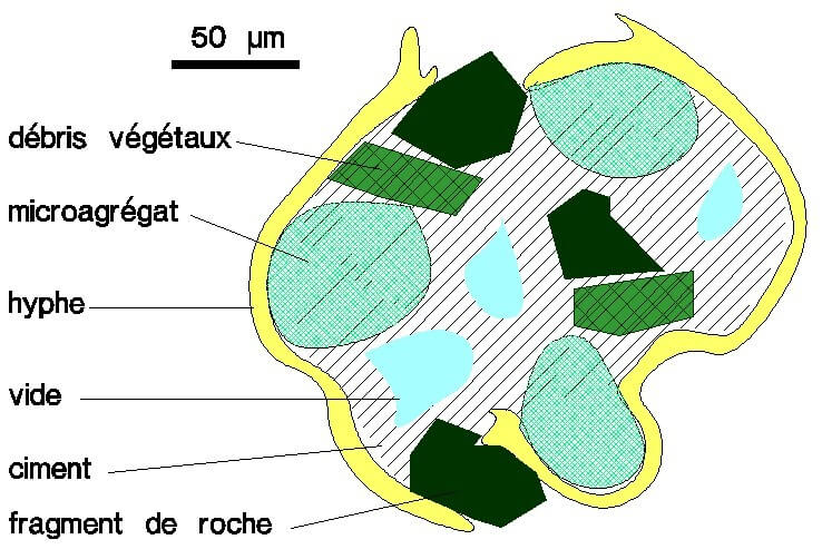 Figure n° 06 : Structure schématique d'un macro-agrégat (BAUCHAMP 1989).