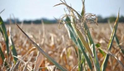 Effets du déficit hydrique sur les plantes
