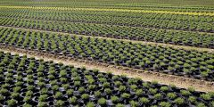 Production des plants en conteneurs