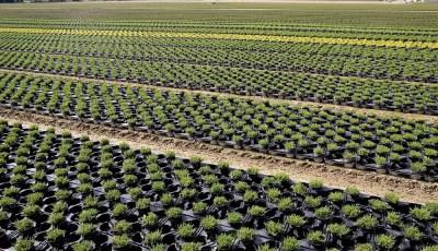Production des plants en conteneurs