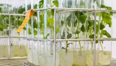 Fondements de la culture in vitro