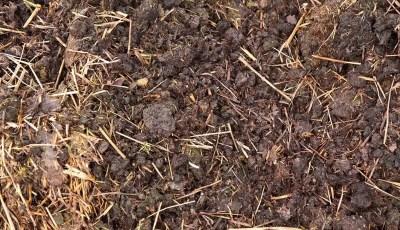 الأسمدة العضوية وأهميتها للتربة الزراعية