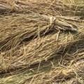 المخلفات الزراعية