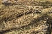 كيفية الاستفادة من المخلفات الزراعية
