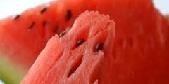 كتاب .. زراعة البطيخ