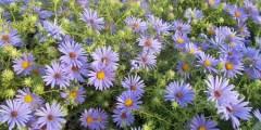معوقات التوسع في زراعة وإنتاج النباتات الطبية والعطرية