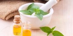 النباتات الطبية و العطرية ( المحاضرة الثانية )