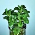 تصنيف النباتات الطبية والعطرية