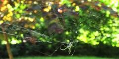 حشرات البساتين