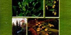 المعجم المصور لأسماء النباتات