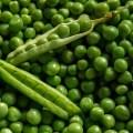 البسلة Peas