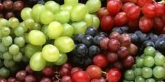 أصناف العنب