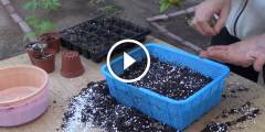 كيفية زراعة بذور النباتات