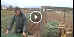 فيديو .. مستقبل الزراعة العضوية