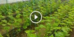 مشروع الزراعة بالشتلات بالتفصيل خطوة بخطوة