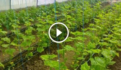 فيديو .. مشروع الزراعة بالشتلات بالتفصيل خطوة بخطوة