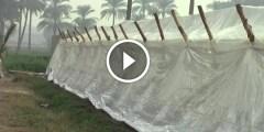 فيديو خطوات انشاء صوبة للزراعة المحمية لصغار المزارعين