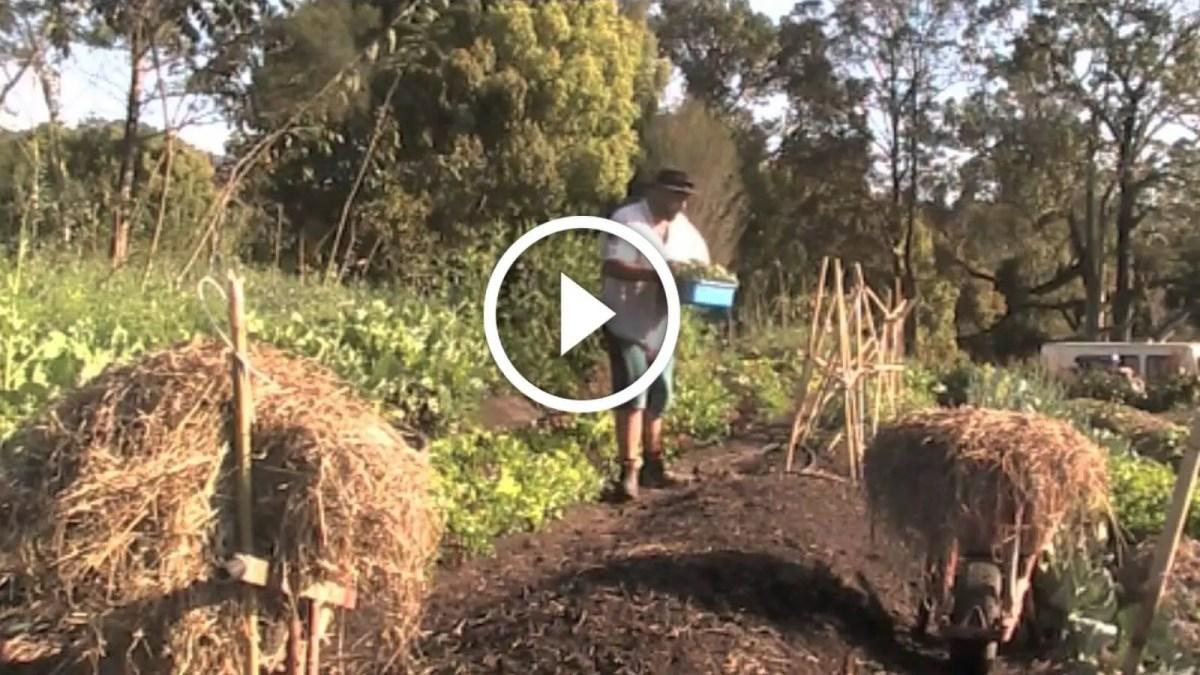 فيديو .. طريقة عمل السماد العضوي