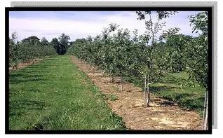 مقاومة متكاملة للحشائش فى بستان تفاح