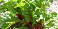 تأثير الملوحة على المحتوى الكيميائي للنبات