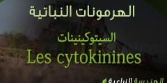 السيتوكينينات Les cytokinines