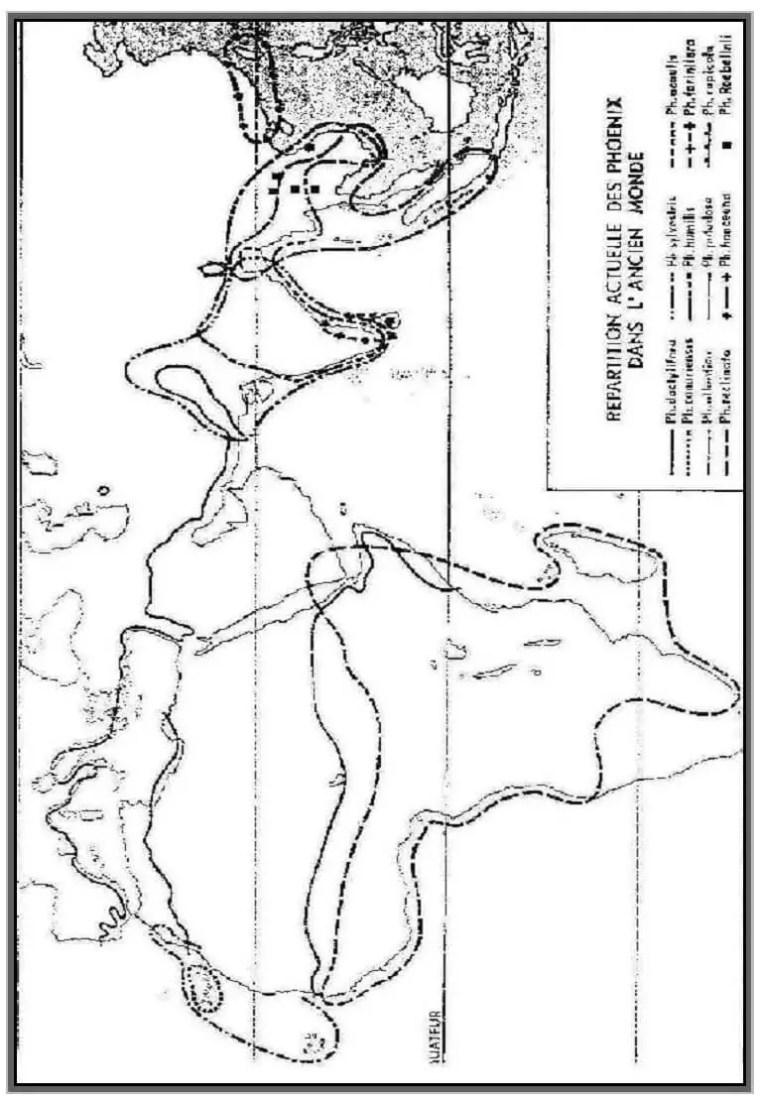 خریطة:- 1-توزیع النخیل في العالم القدیم