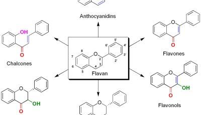 الأقسام المختلفة للفلافونويدات