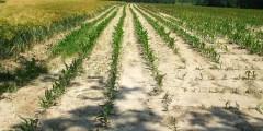 آليات مقاومة النباتات للجفاف