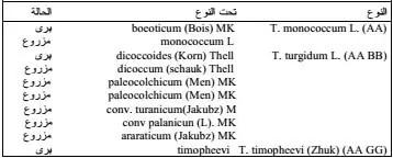 جدول 1. تصنيف أنواع جنس Triticumحسب(1981) Williams وCroston .