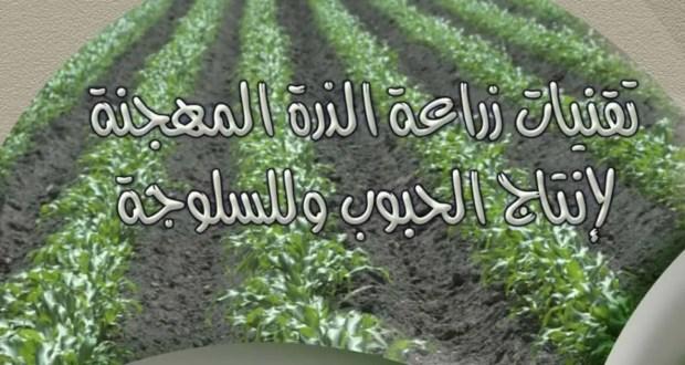 تقنيات زراعة الذرة المهجنة