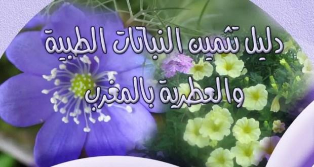 دليل تثمين النباتات الطبية والعطرية بالمغرب