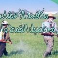 مكافحة الأعشاب في محاصيل القمح والشعير