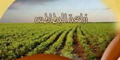 كتاب زراعة البطاطس