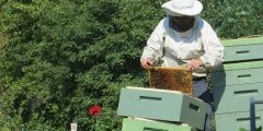 كتاب تربية النحل بالطرق الحديثة