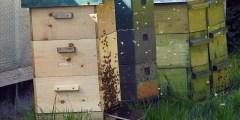 كتاب تربية النحل الحديثة