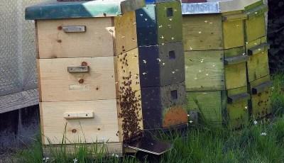 كتاب تربية النحل