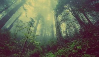 كتاب الغابات الجزء الثاني