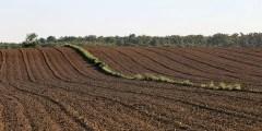 كتاب خصوبة التربة وتغذية النبات عملي