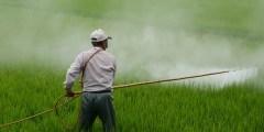 كتاب المبيدات الحشرية