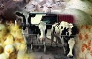 كتاب امراض الحيوانات