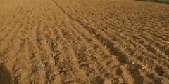 استصلاح الأراضي المالحة 2