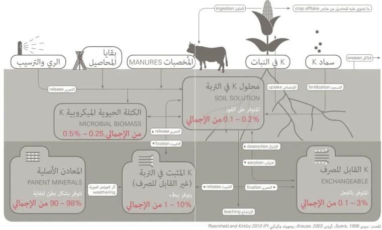 الشكل  .4رسم تخطيطي لدورة البوتاسيوم في التربة والزراعة