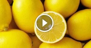 زراعة بذور الليمون في المنزل