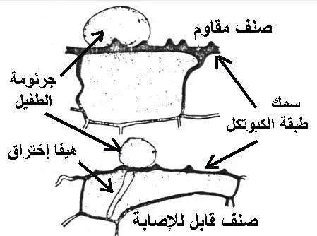 دور سمك طبقة الكيوتيكل في المقاومة