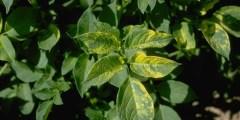 أعراض وعلامات الإصابة بأمراض النبات