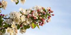 الجهاز التكاثري و علم تصنيف النبات