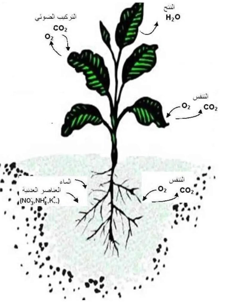 الشكل1– الشكل المورفولوجي للنباتات الوعائية