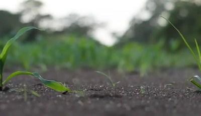 التعرف على الحاجة للتسميد من تحليل التربة