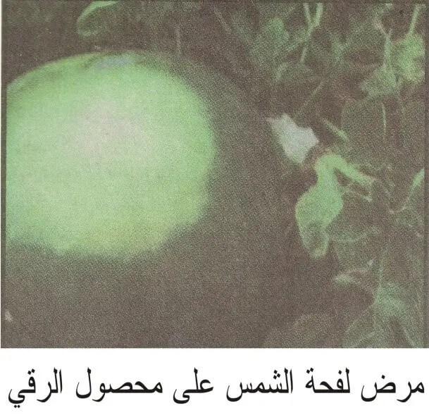 محصول الرقي